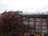 Foto Продажа жилая Челябинская область Медиак