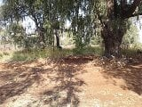 Photo Vacant Land Residential For Sale in CULLINAN,