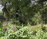 Photo Vacant Land / Plot For Sale in Kisii for KSh 2...
