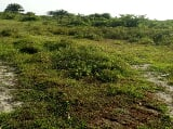 Photo Dry plots of land- ibeju lekki, nigeria