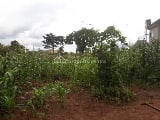 Photo Residential Land for Sale in Enugu State