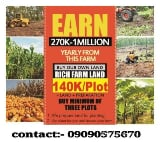 Photo Plantain Farmland Ogun State