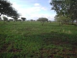 Photo Undeveloped Farm Bela-, Limpopo - South Africa