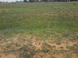 Photo Vacant land in nelsonia